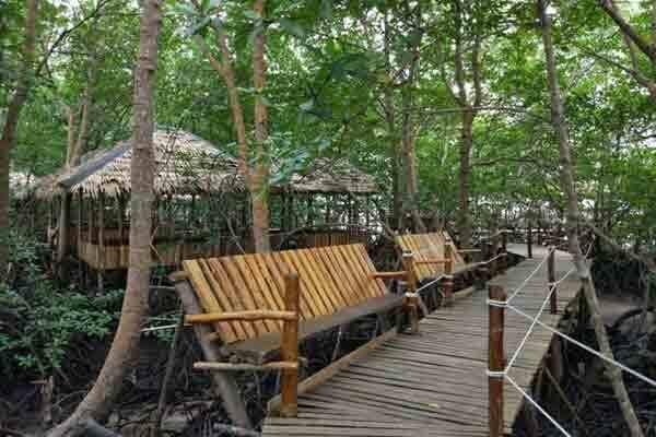 Mangrove trc