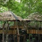 gazebo tersedia di wisata mangrove