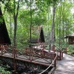 pondok untuk santai di mangrove trc