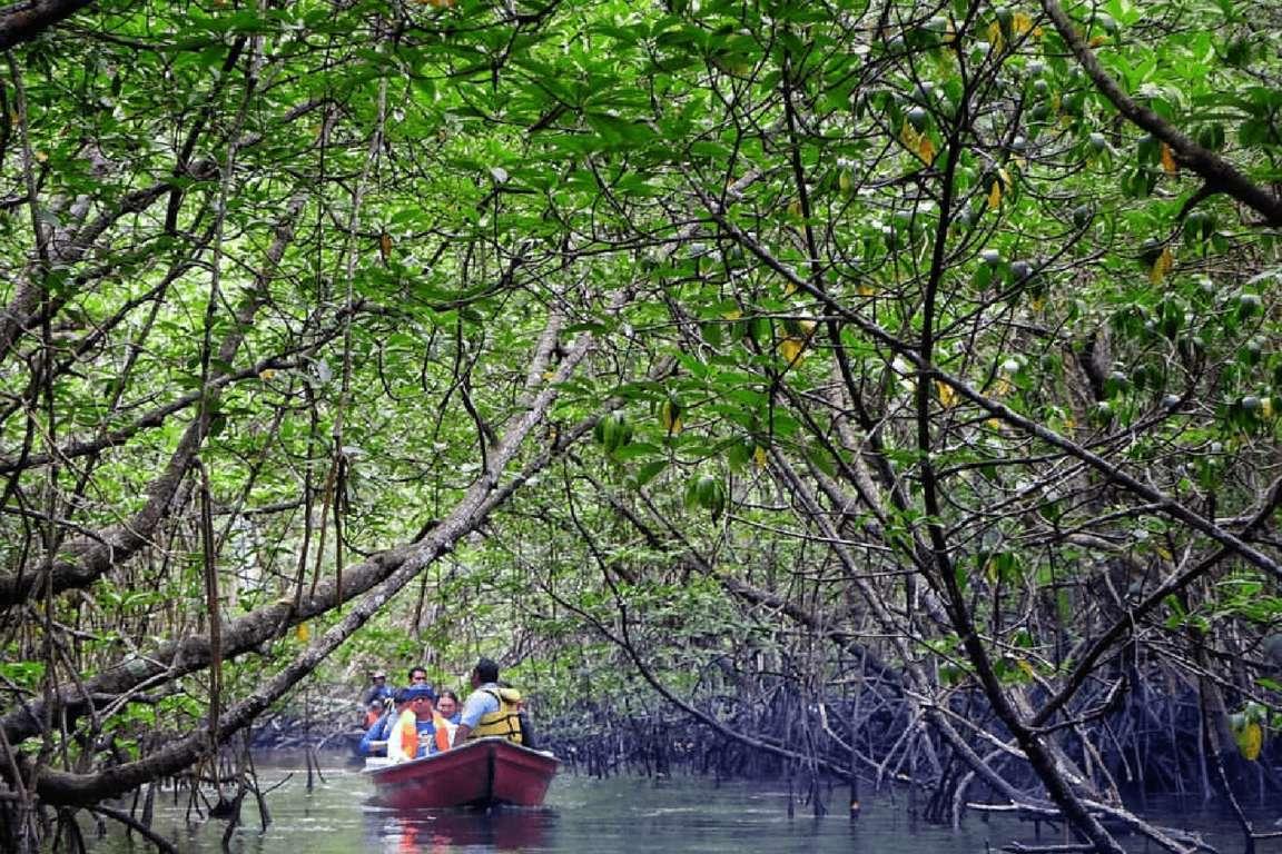 Mangrove river tour