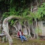Vihara akar pohon